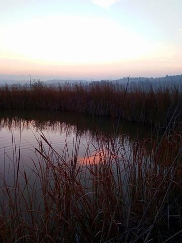 curare la bronchite senza antibiotico-tramonto rosa