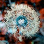 Esercizi di bellezza: come scovare e seminare bellezza per regalarla al mondo