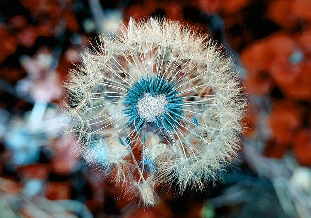 esercizi di bellezza -seminare bellezza