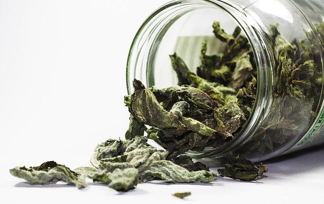 Essiccare le erbe aromatiche - menta